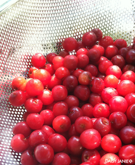 Life Is A Bowl Of Cherries Daisy Janie